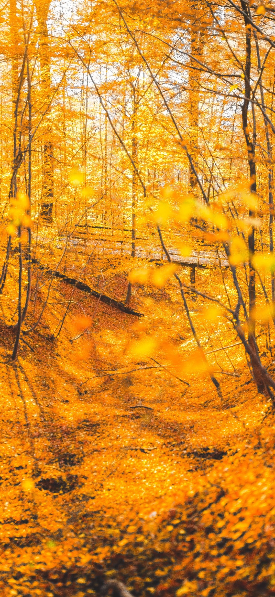 1125x2436 Autumn Forest Trees 5k Iphone Xs Iphone 10 Iphone