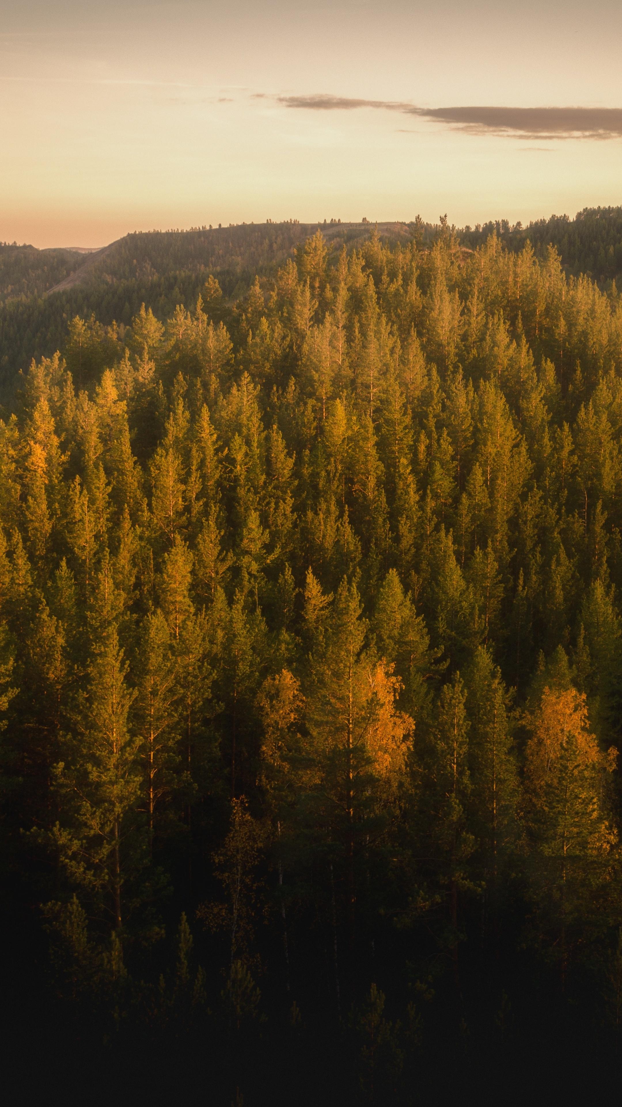 autumn-forests-of-the-nurali-hills-5k-bp.jpg