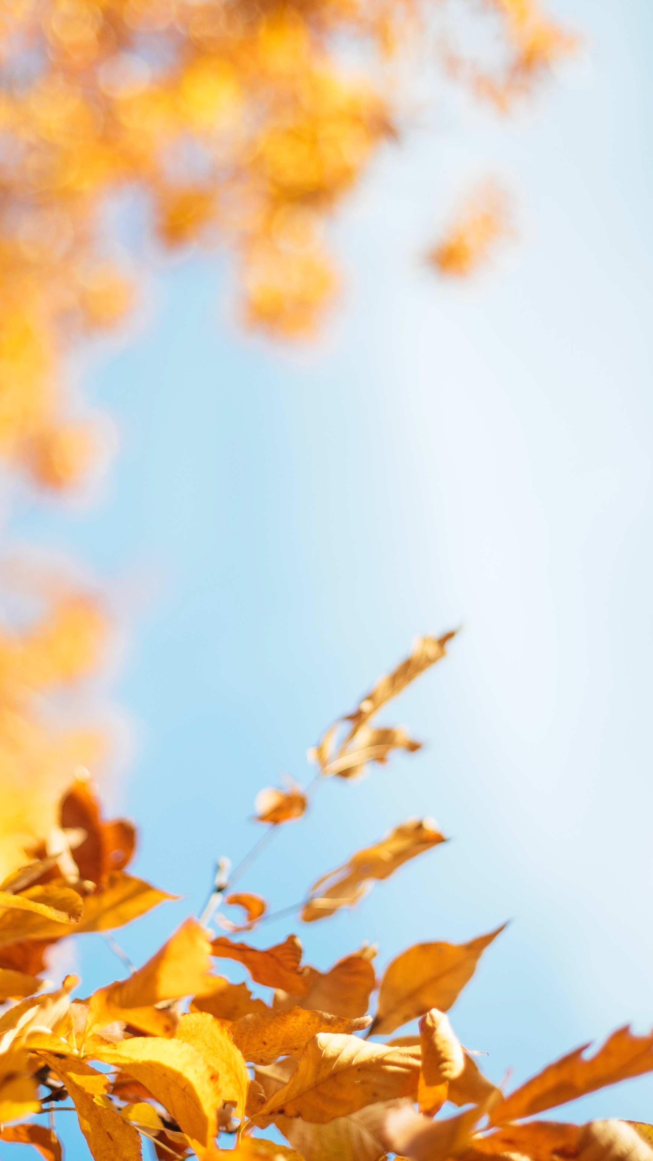autumn-leave-r8.jpg