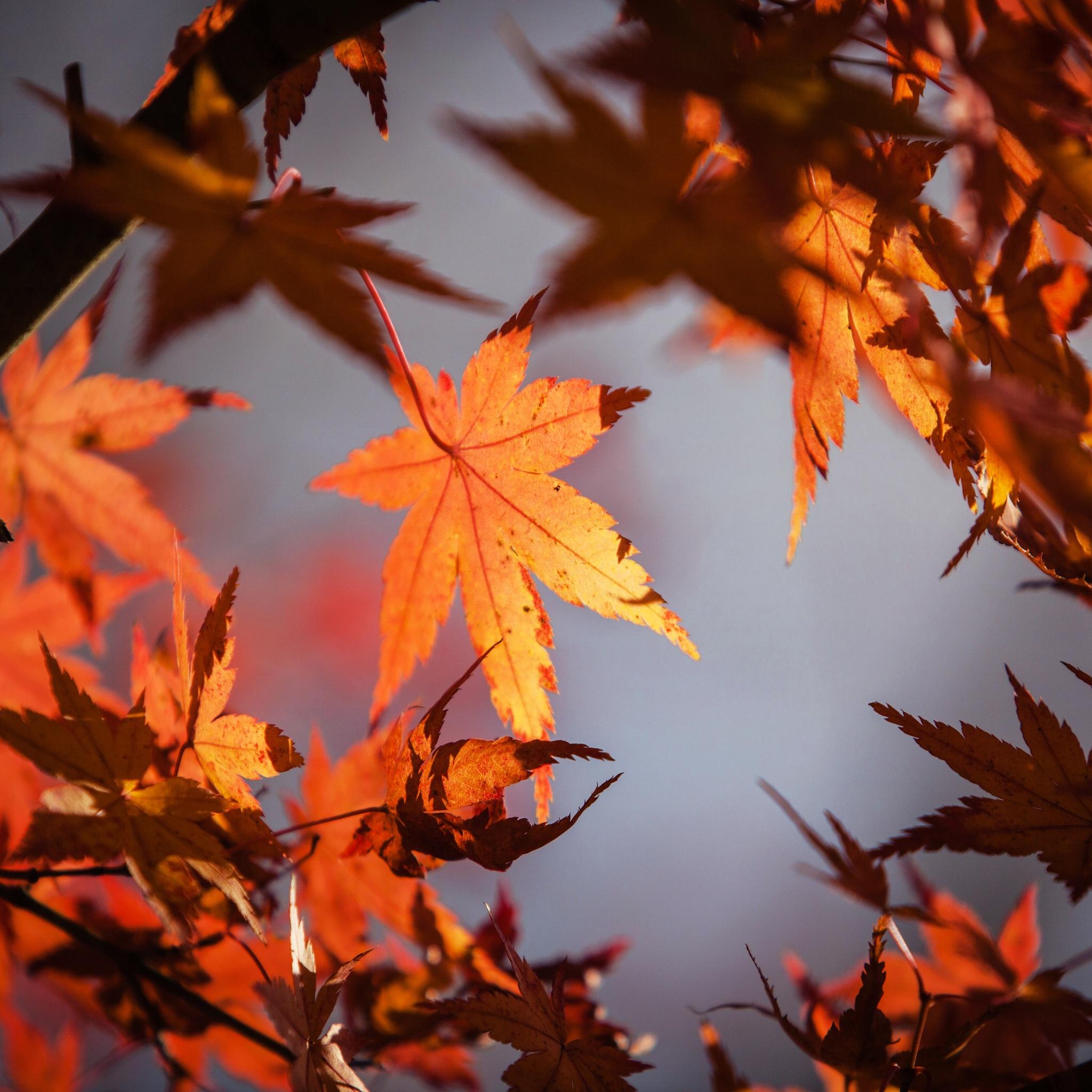 autumn-leaves-4k-5k-w8.jpg