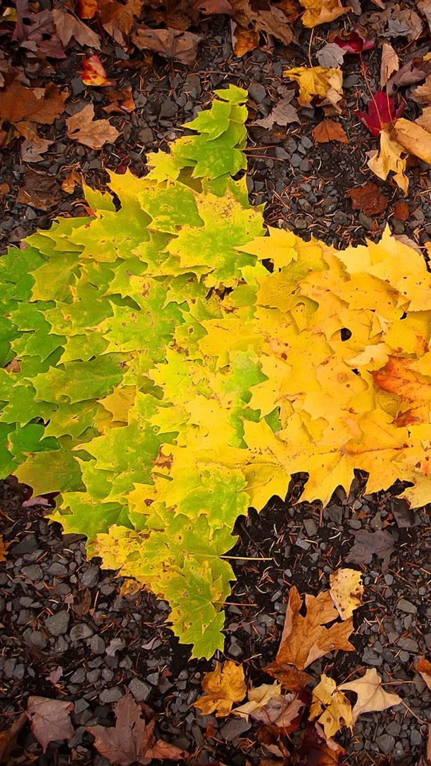 1440x2560 Autumn Leaves arrow Samsung Galaxy S6,S7 ,Google ...