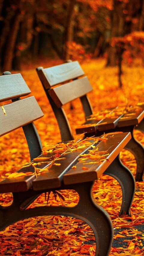 autumn-leaves-bench.jpg