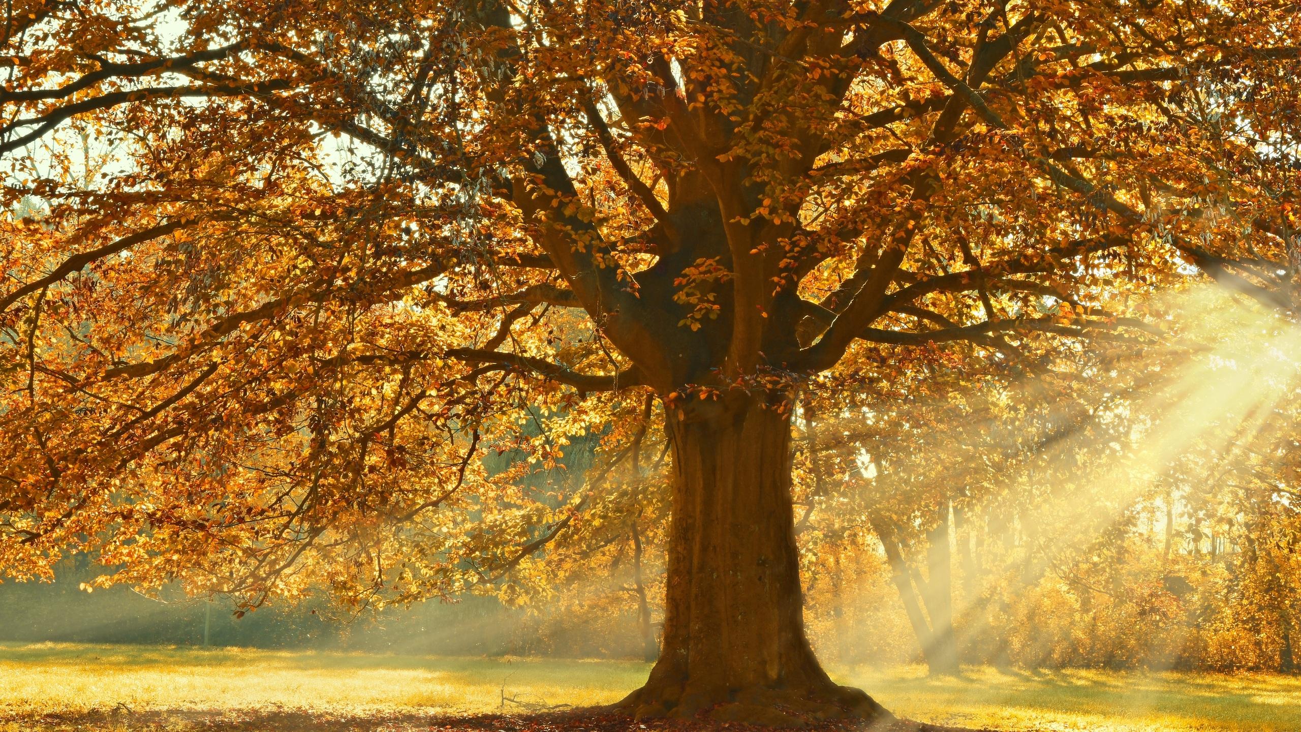 autumn-rays-of-light-trees-5k-fe.jpg