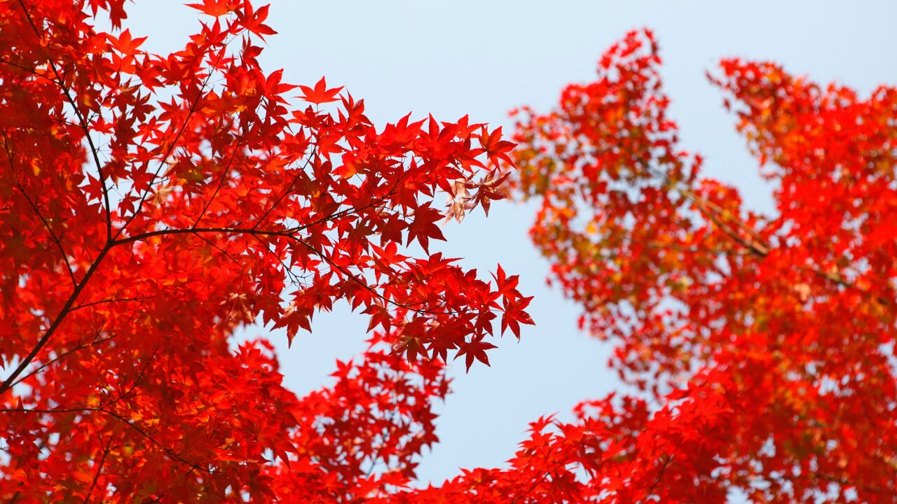 autumn-red-leaf-orange-te.jpg