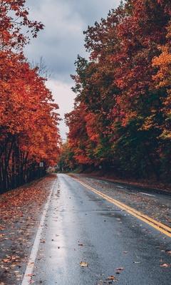 autumn-road-trees-on-sides-fallen-leaves-mc.jpg