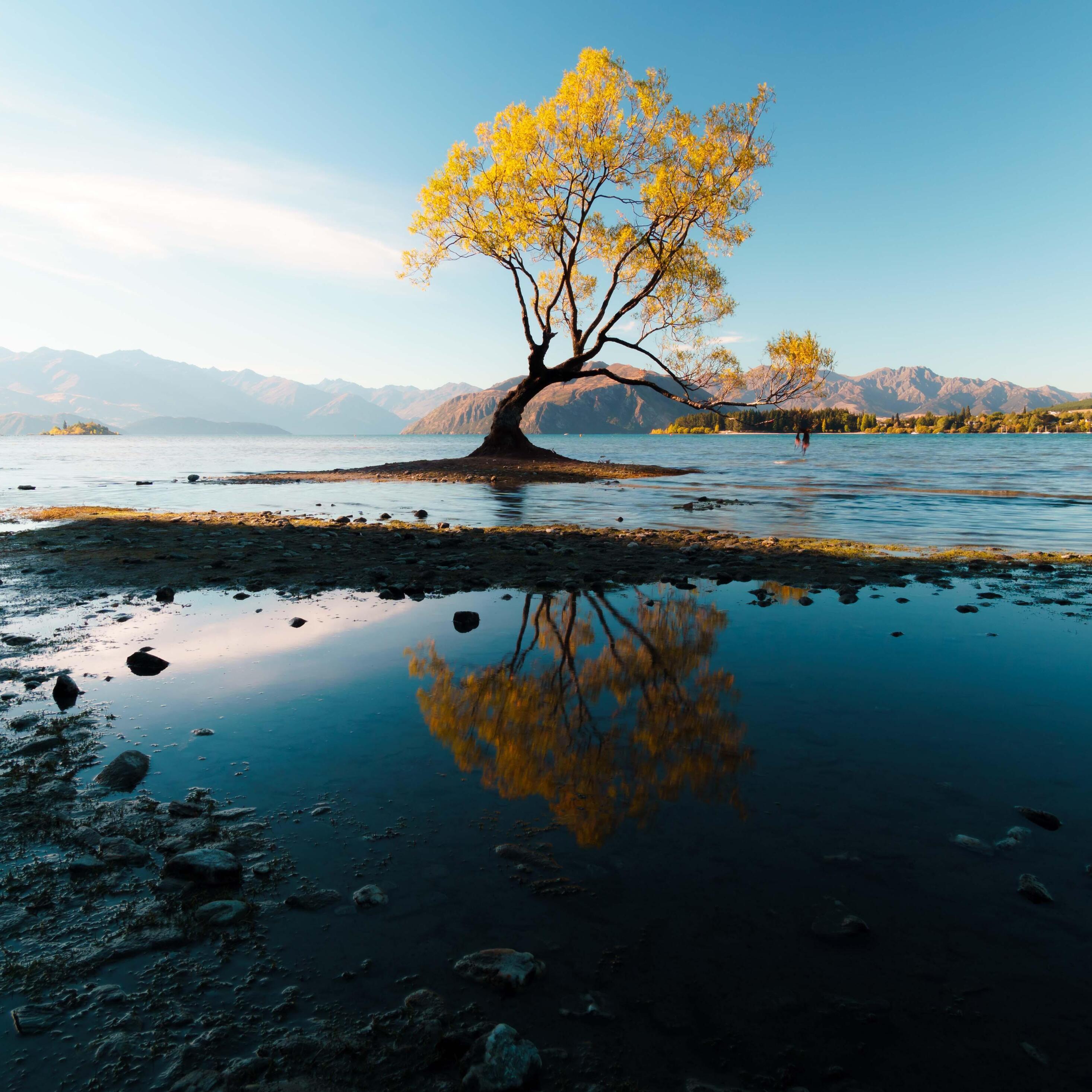 autumn-tree-5k-new.jpg