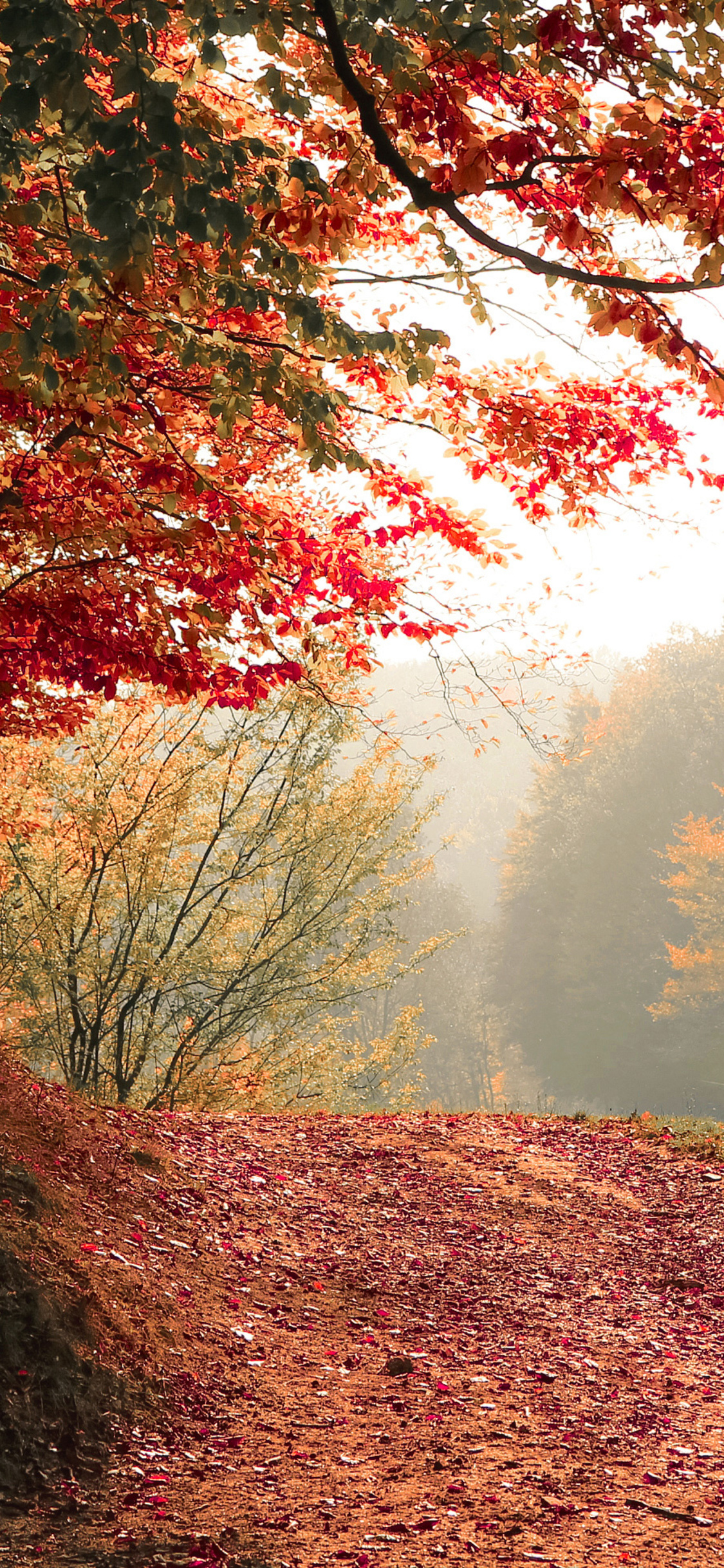 1125x2436 Autumn Tree Fall 4k Iphone Xs Iphone 10 Iphone X