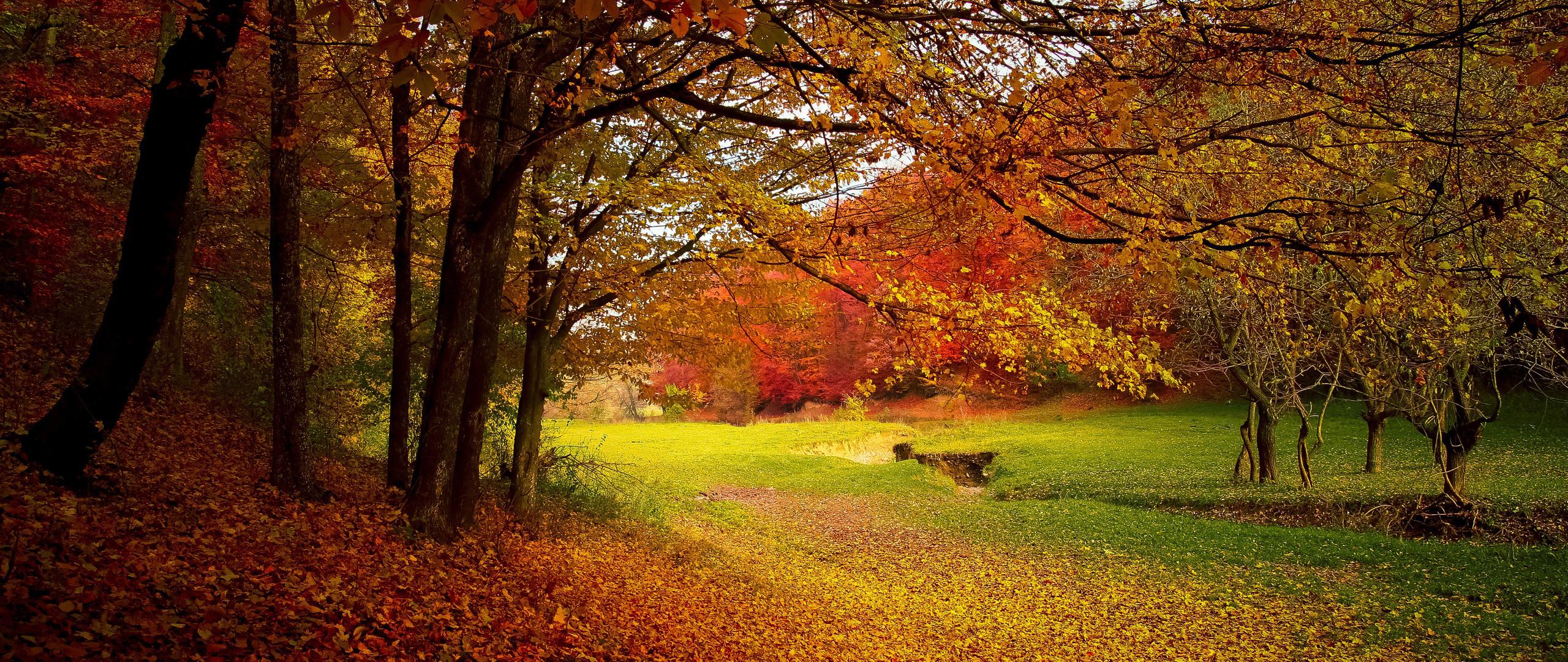 autumn-trees-fall-gj.jpg