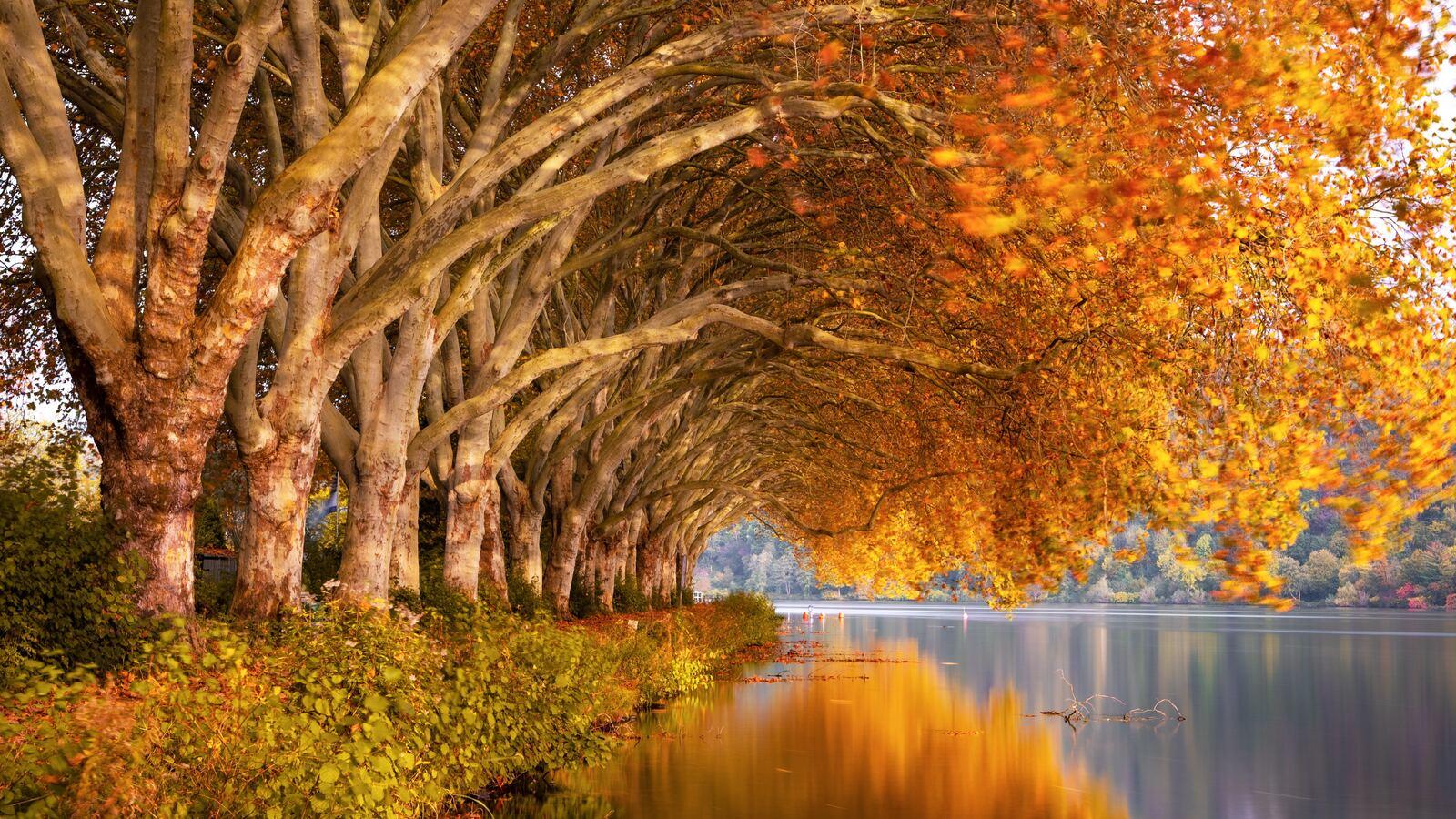 autumn-trees-orange-lake-5k-j6.jpg