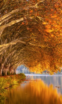 autumn-trees-orange-lake-5k-j6.jpg
