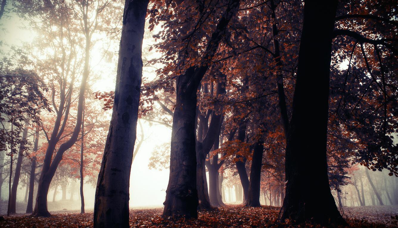 autumn-trees-park-forest-5k-u5.jpg