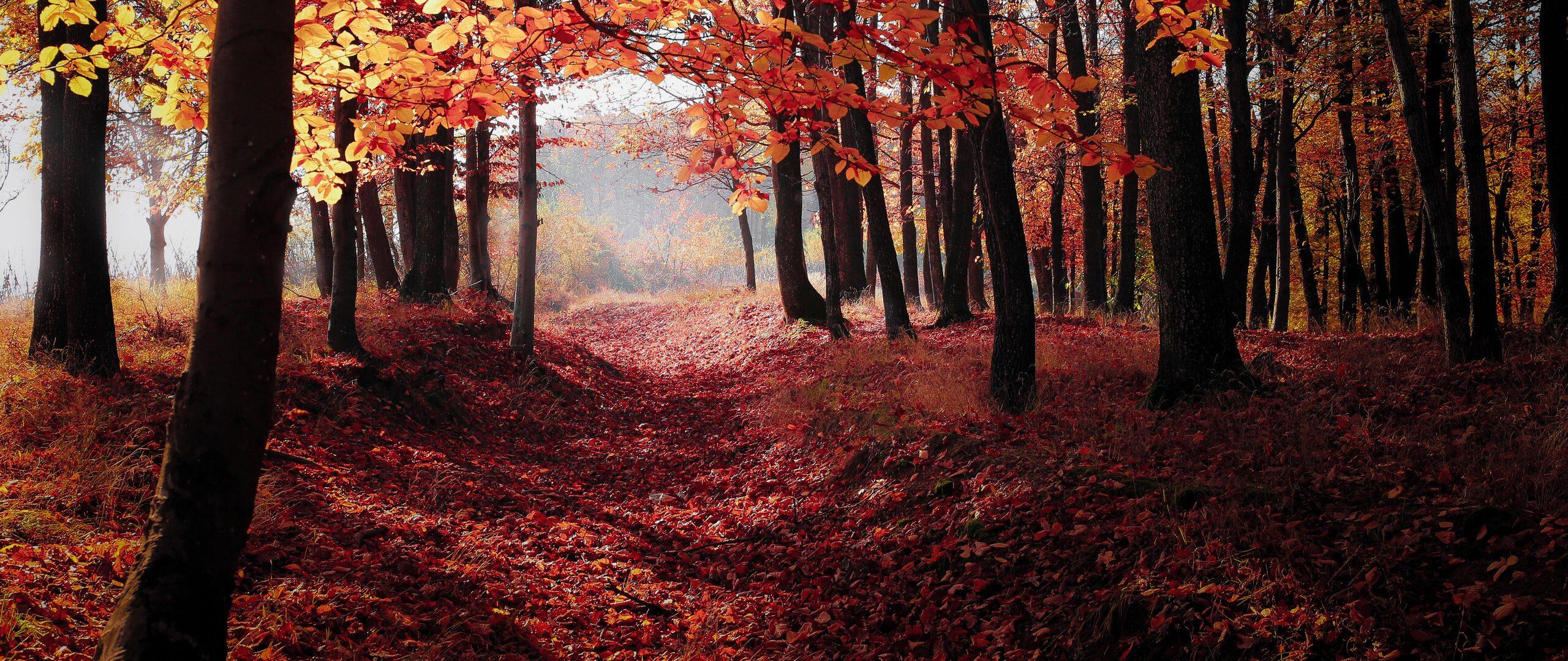 autumn-woods-trees-fall-forest-5k-uj.jpg