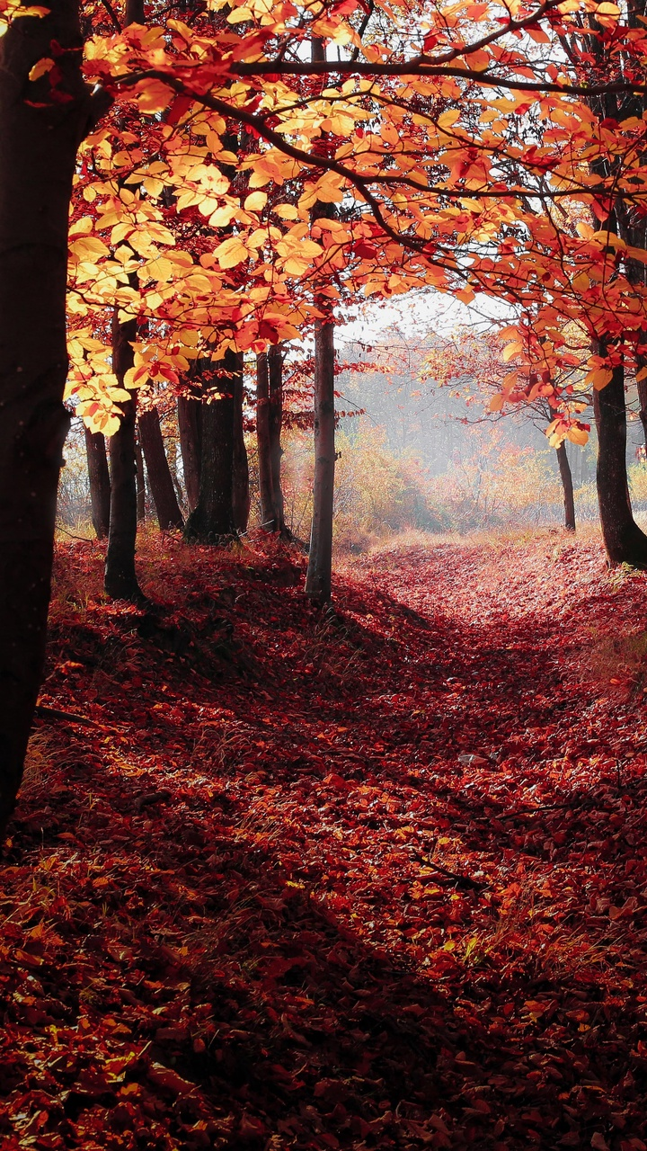 autumn-woods-trees-fall-forest-5k-uj.jpg