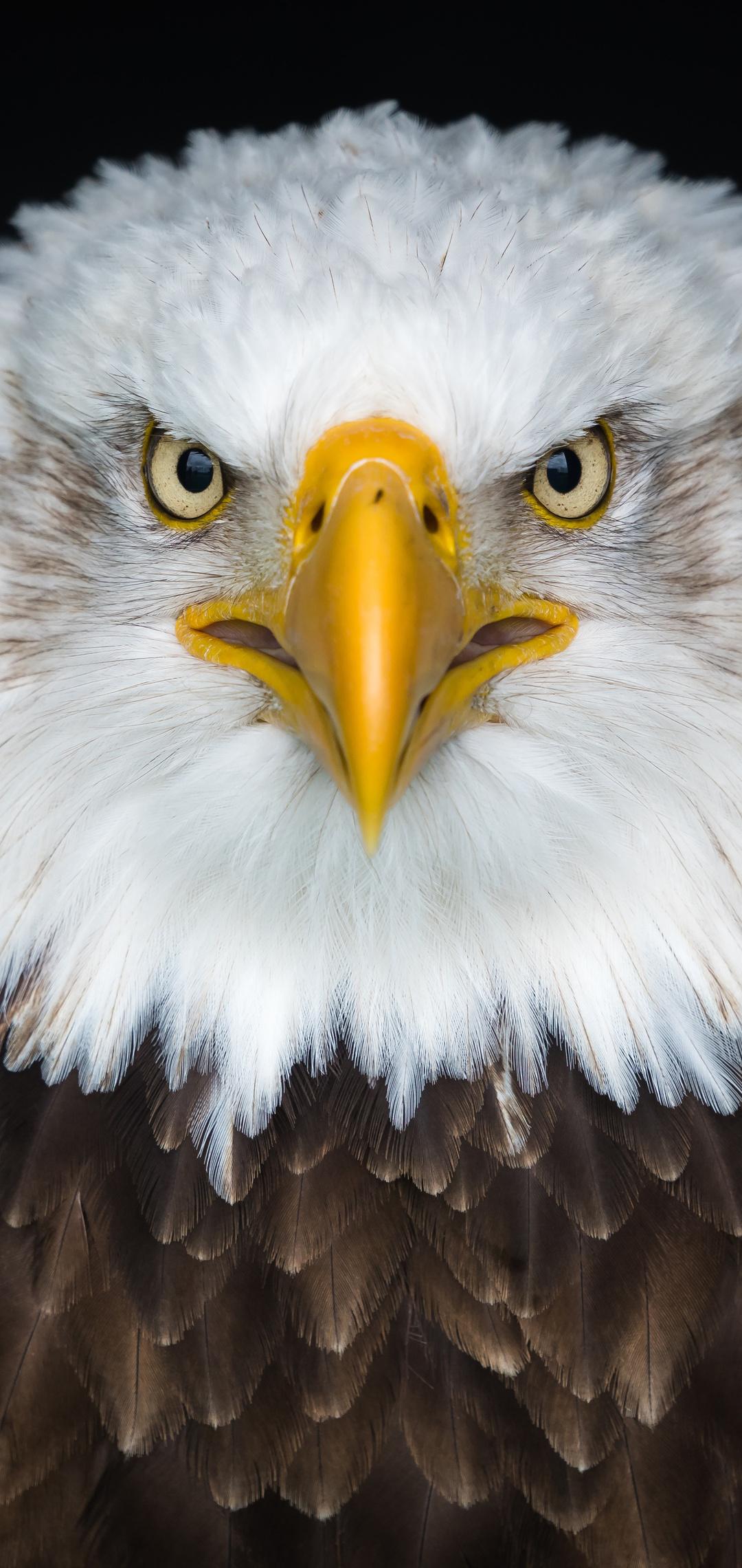 bald-eagle-8k-oe.jpg