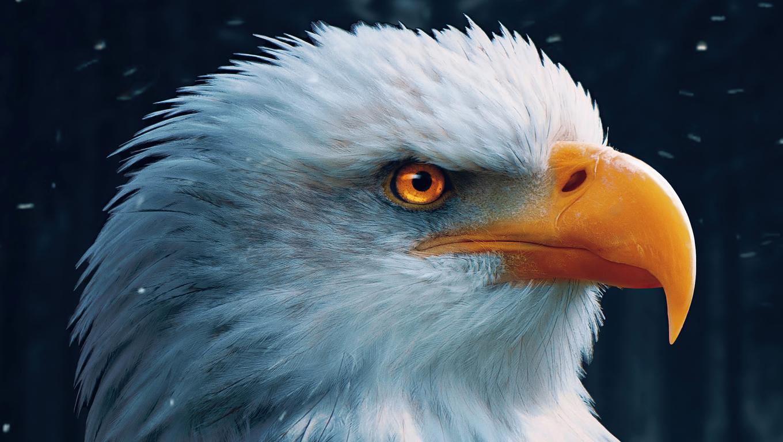bald-eagle-closeup-4k-s7.jpg