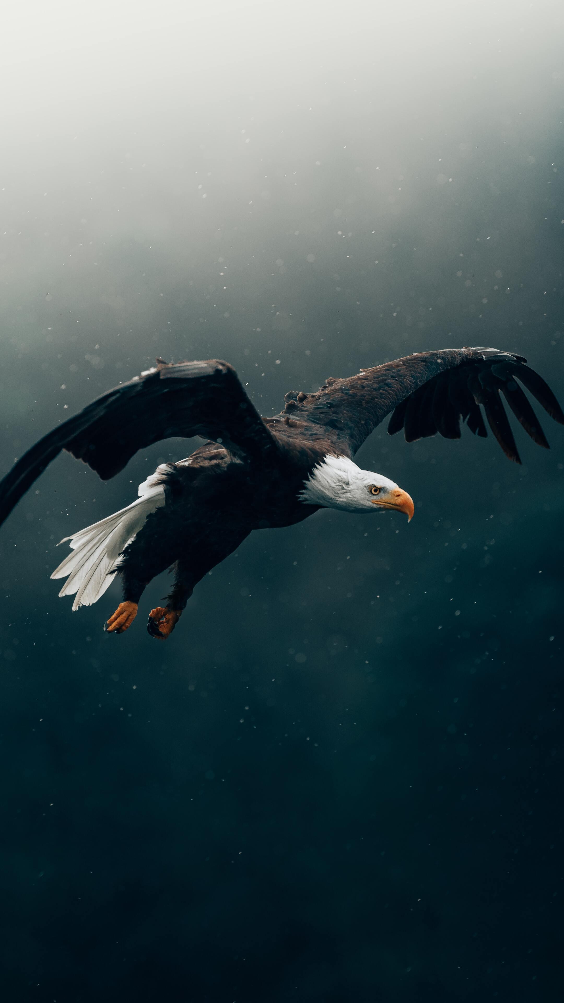 bald-eagle-flying-4k-7w.jpg