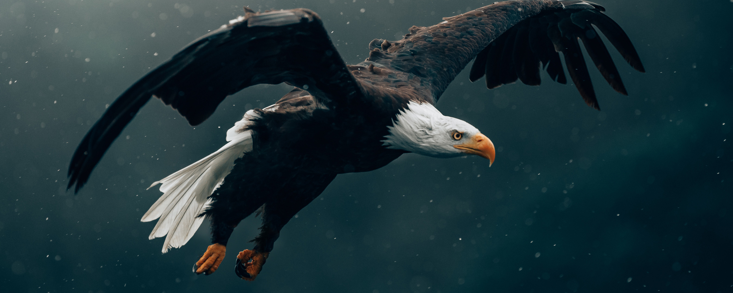 bald-eagle-flying-4k-7w.jpg