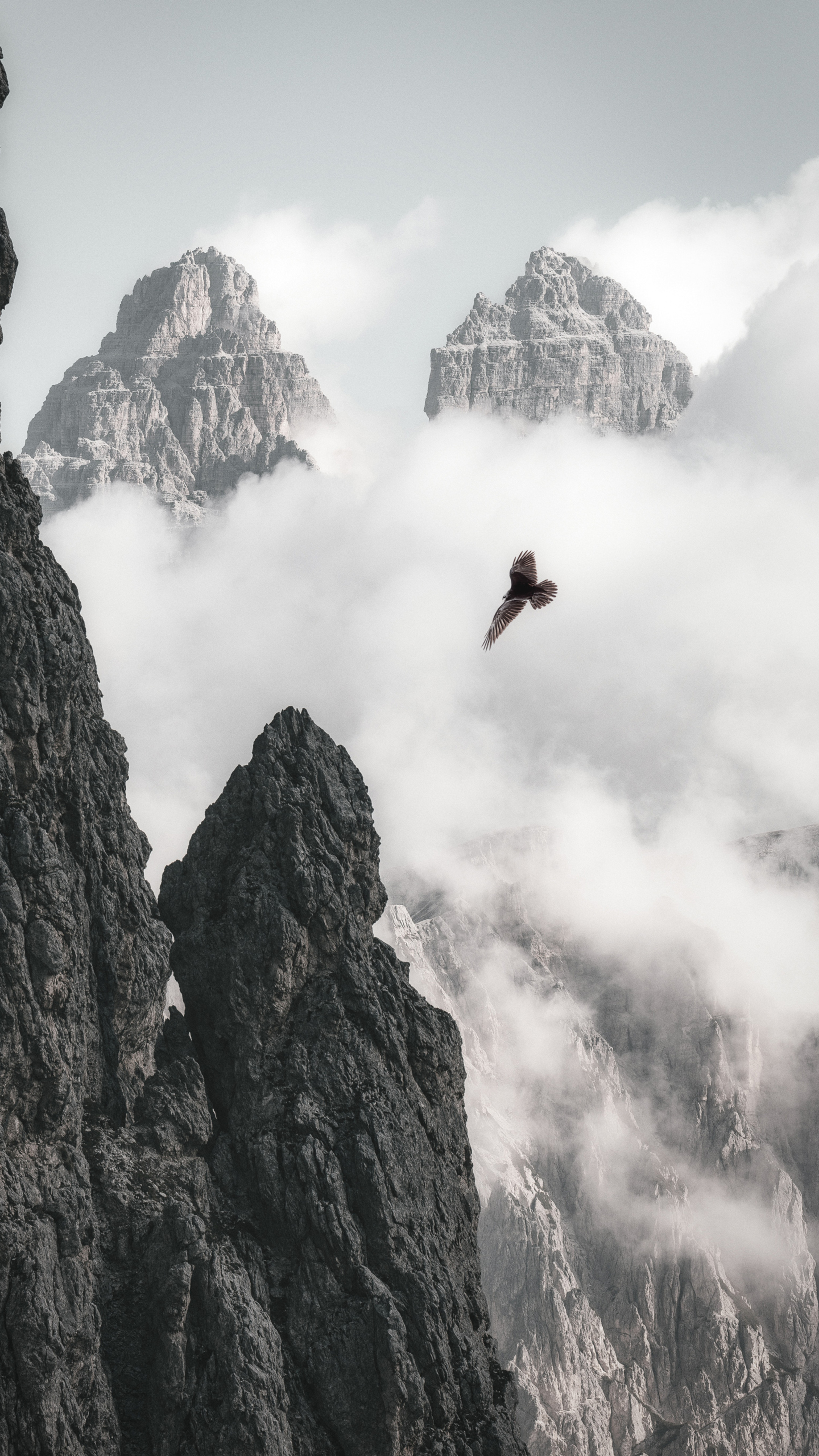 bald-eagle-flying-through-clouds-and-mountains-4k-je.jpg