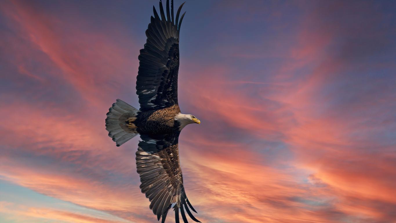 bald-eagle-open-wings-sky-5k-pi.jpg