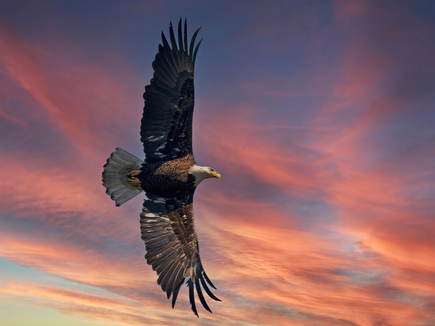 bald-eagle-open-wings-sky-5k-pi.jpg