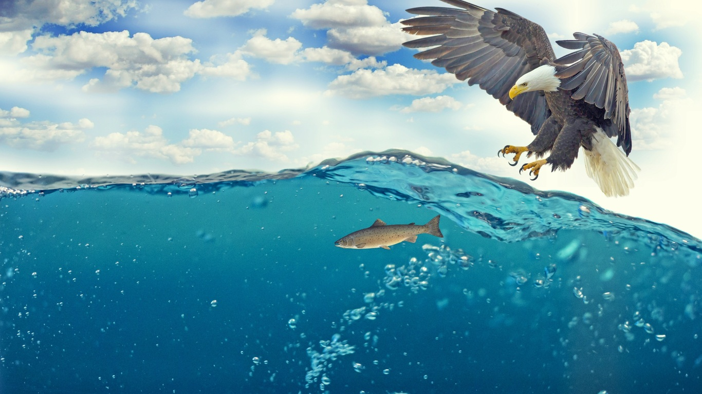 bald-eagle-raptor-catching-fish-4k-4o.jpg