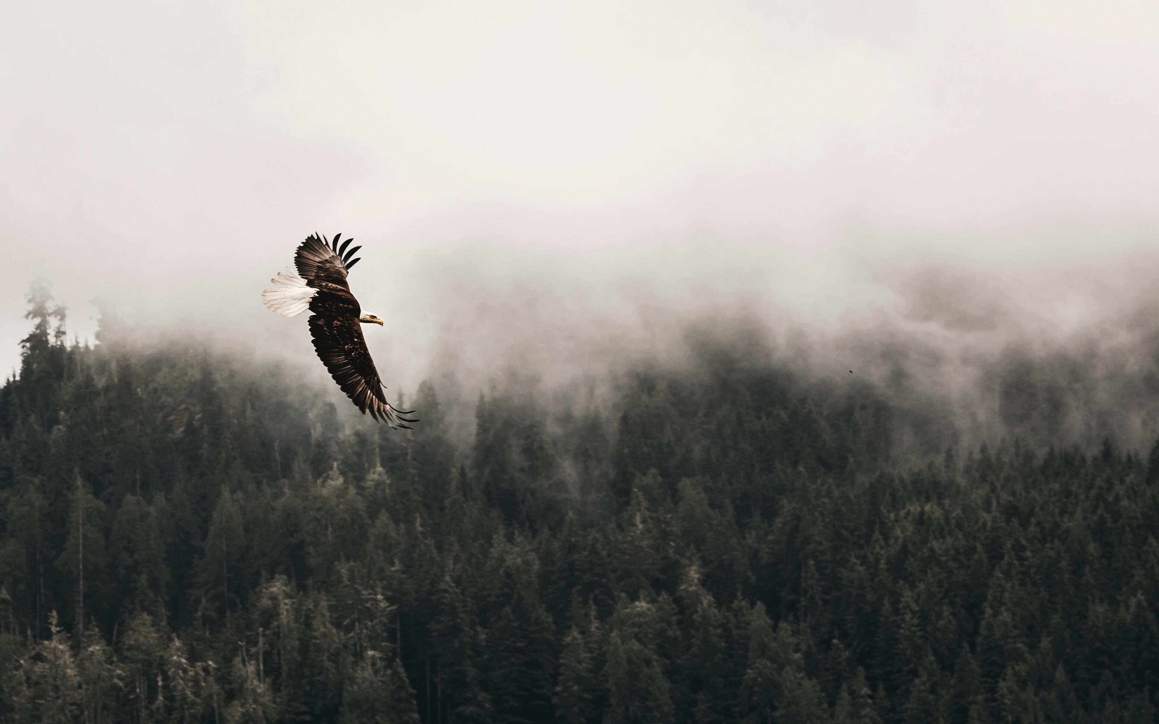 bald-eagle-sky-5k-jh.jpg