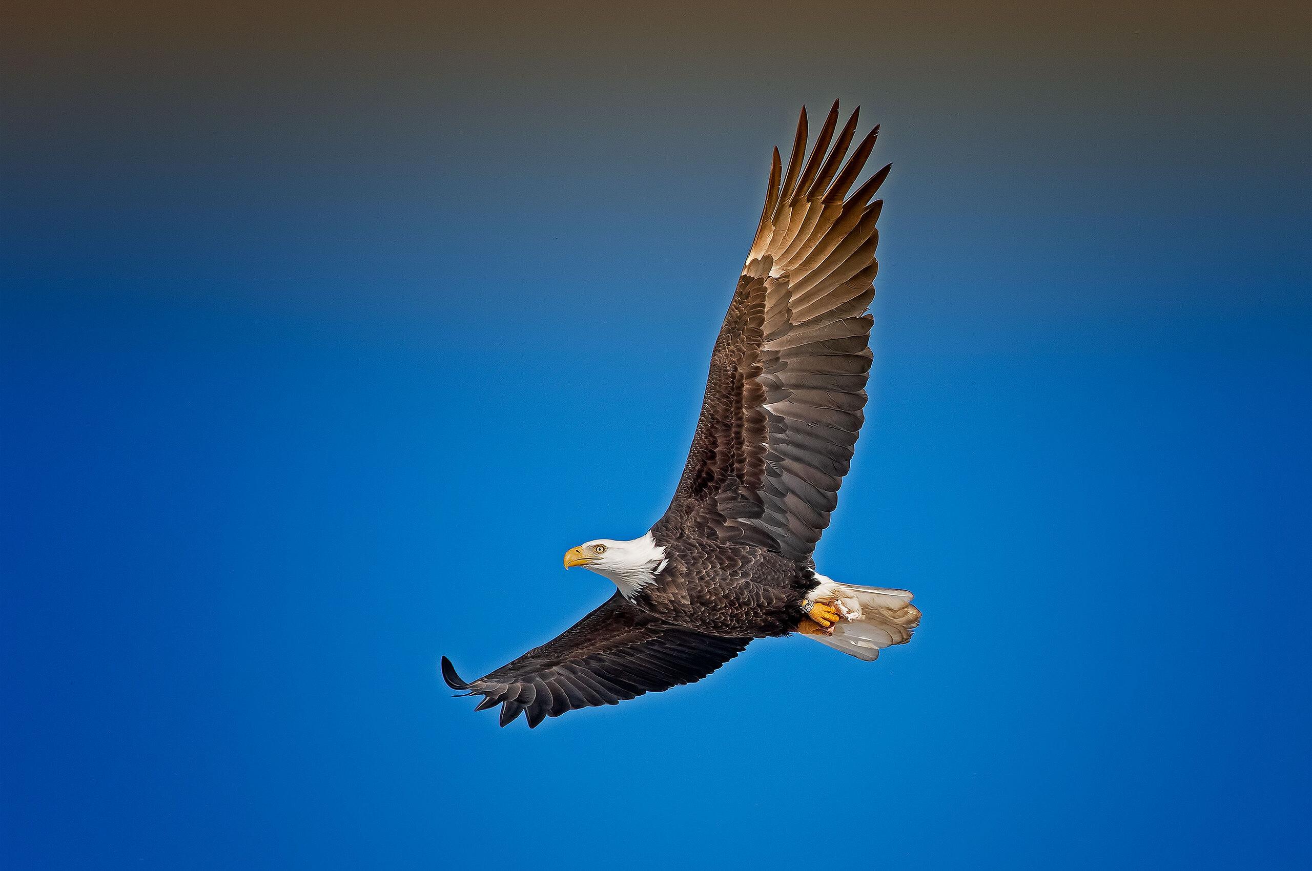 bald-eagle-sky-j8.jpg