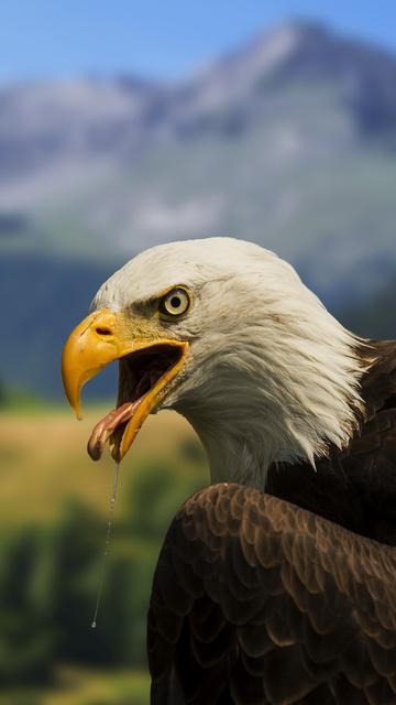 bald-hawk-4k-5a.jpg