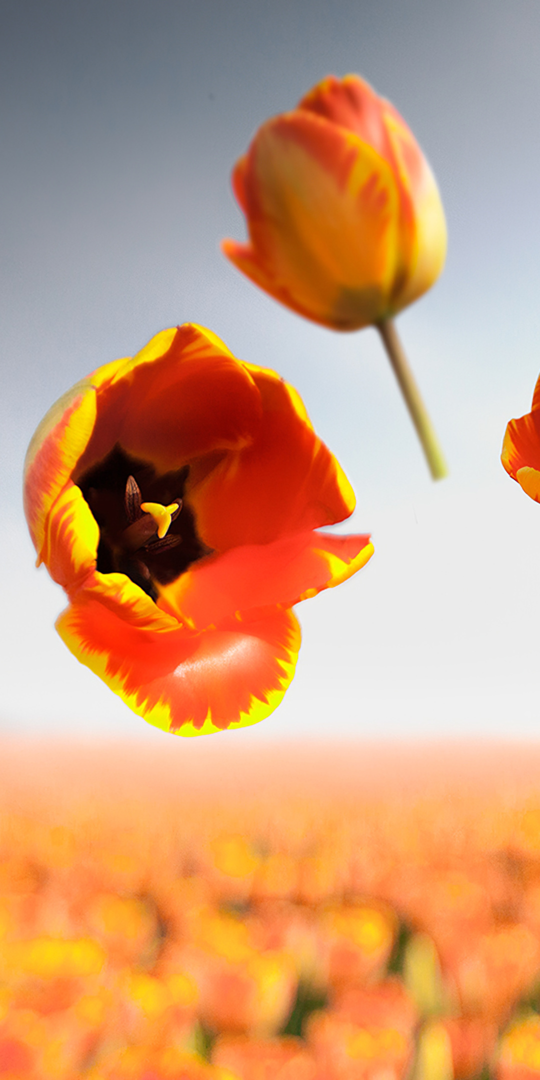 banja-luka-flowers-l8.jpg