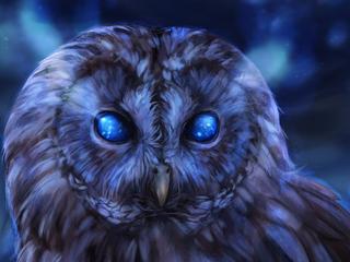 bared owl zc