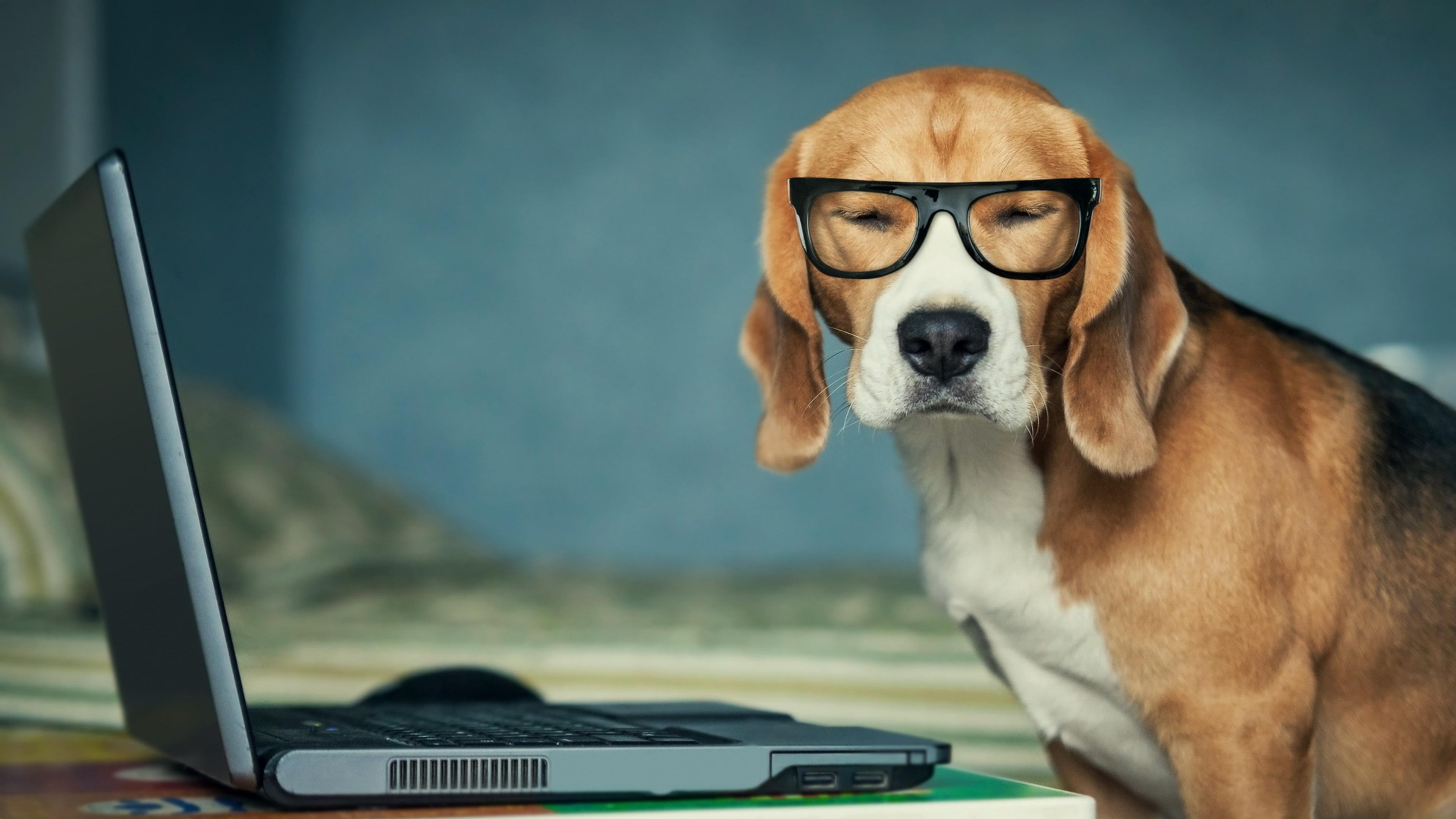 beagle-funny.jpg