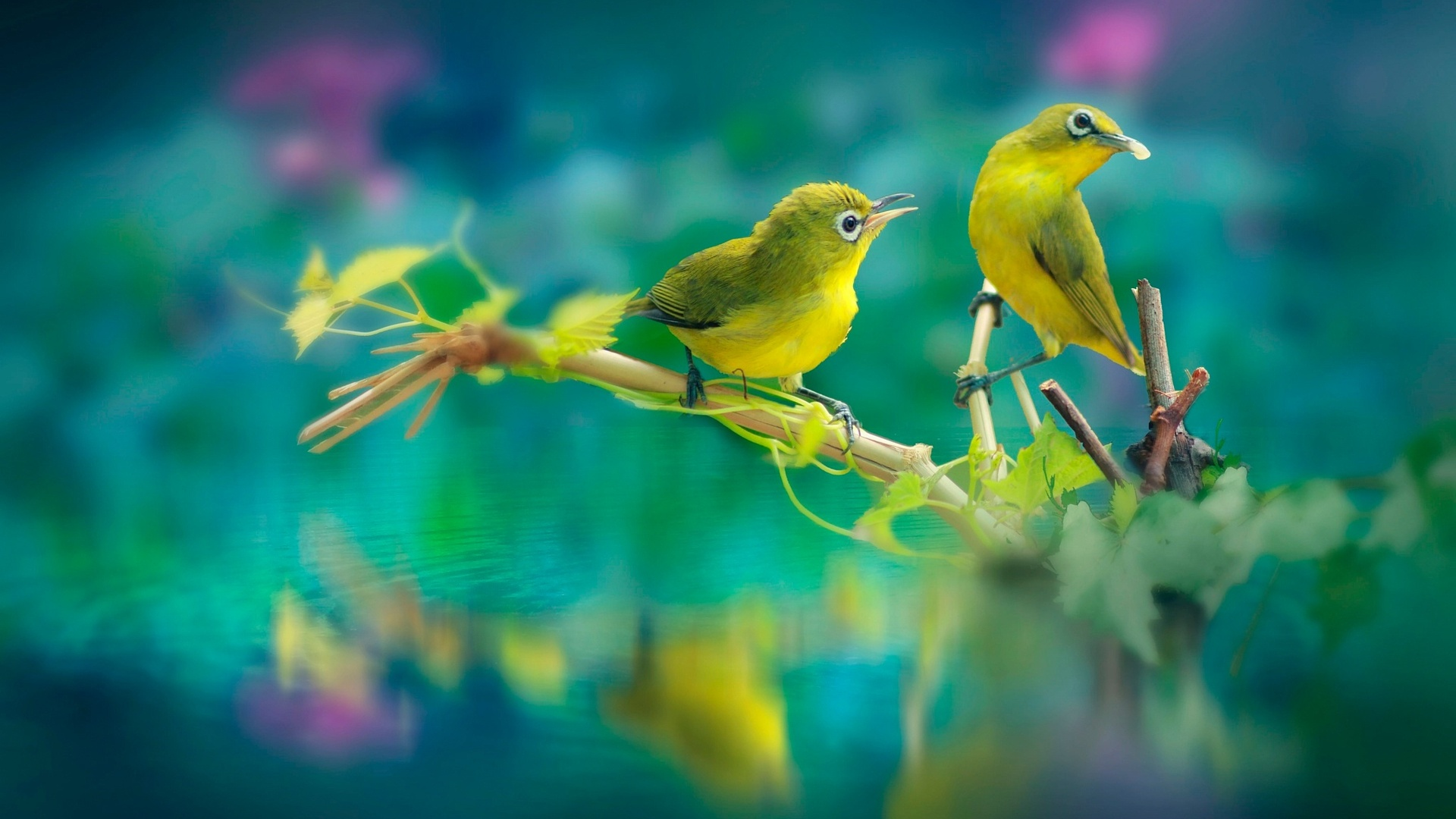 1920x1080 Beautiful Birds Laptop Full Hd 1080p Hd 4k Wallpapers Images Backgrounds Photos And Pictures