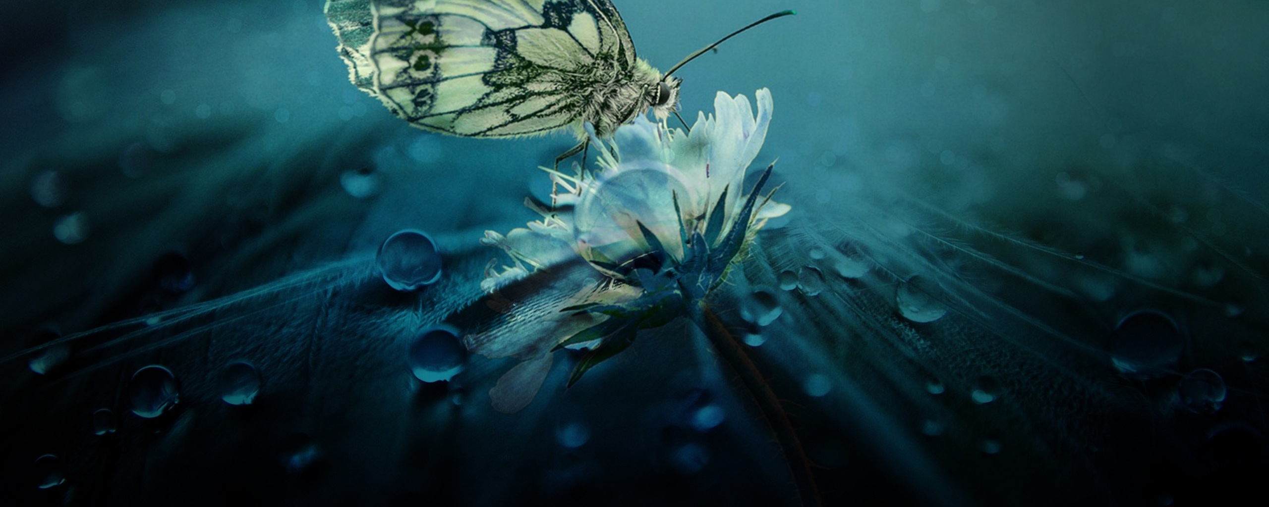 beautiful-butterfly-nature-c1.jpg
