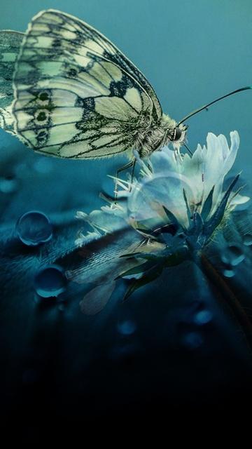 beautiful-butterfly-nature-c1.jpg