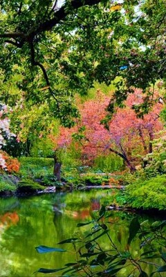 beautiful-garden-nature.jpg