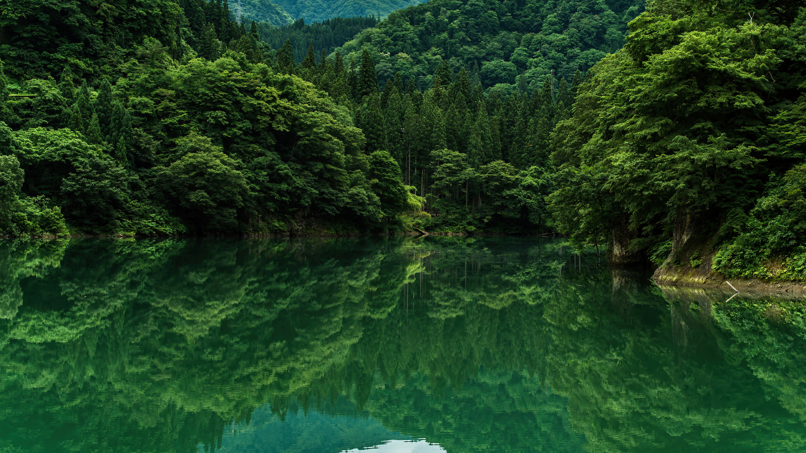 beautiful-greenery-8k-6q.jpg