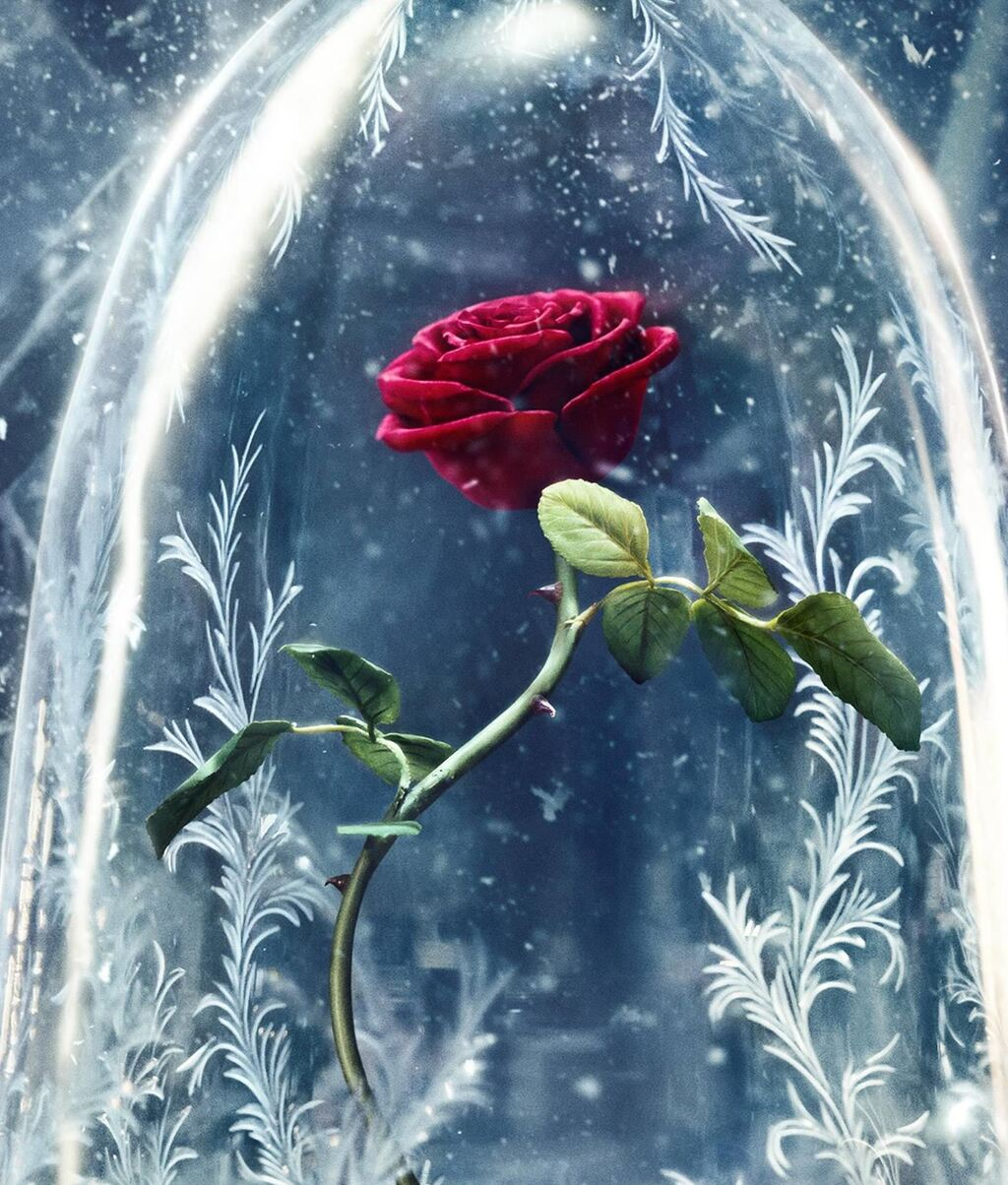 Black And White Beauty Flower And The Beast Pictures To