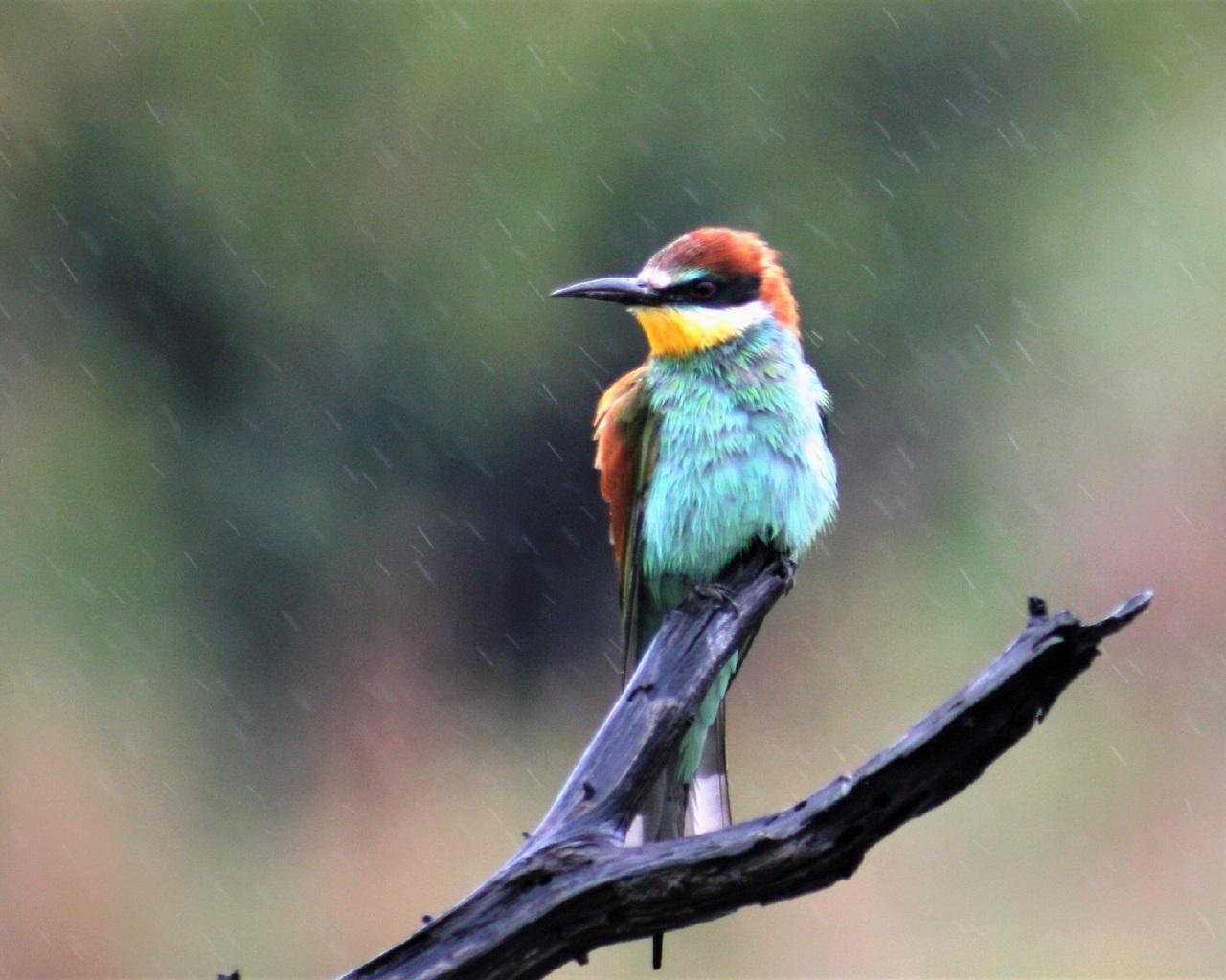 bee-eater-4k-xj.jpg