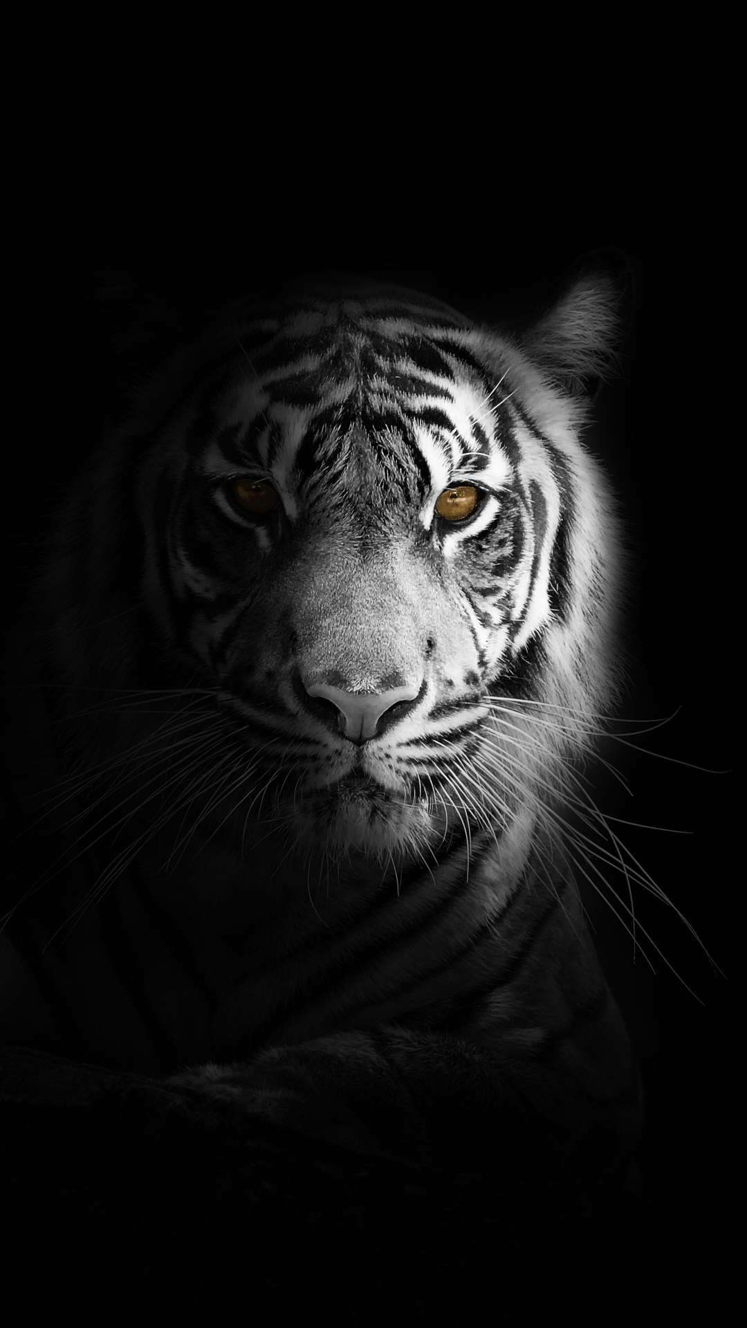1080x1920 Big Cat Tiger 4k Iphone 7 6s 6 Plus Pixel Xl One
