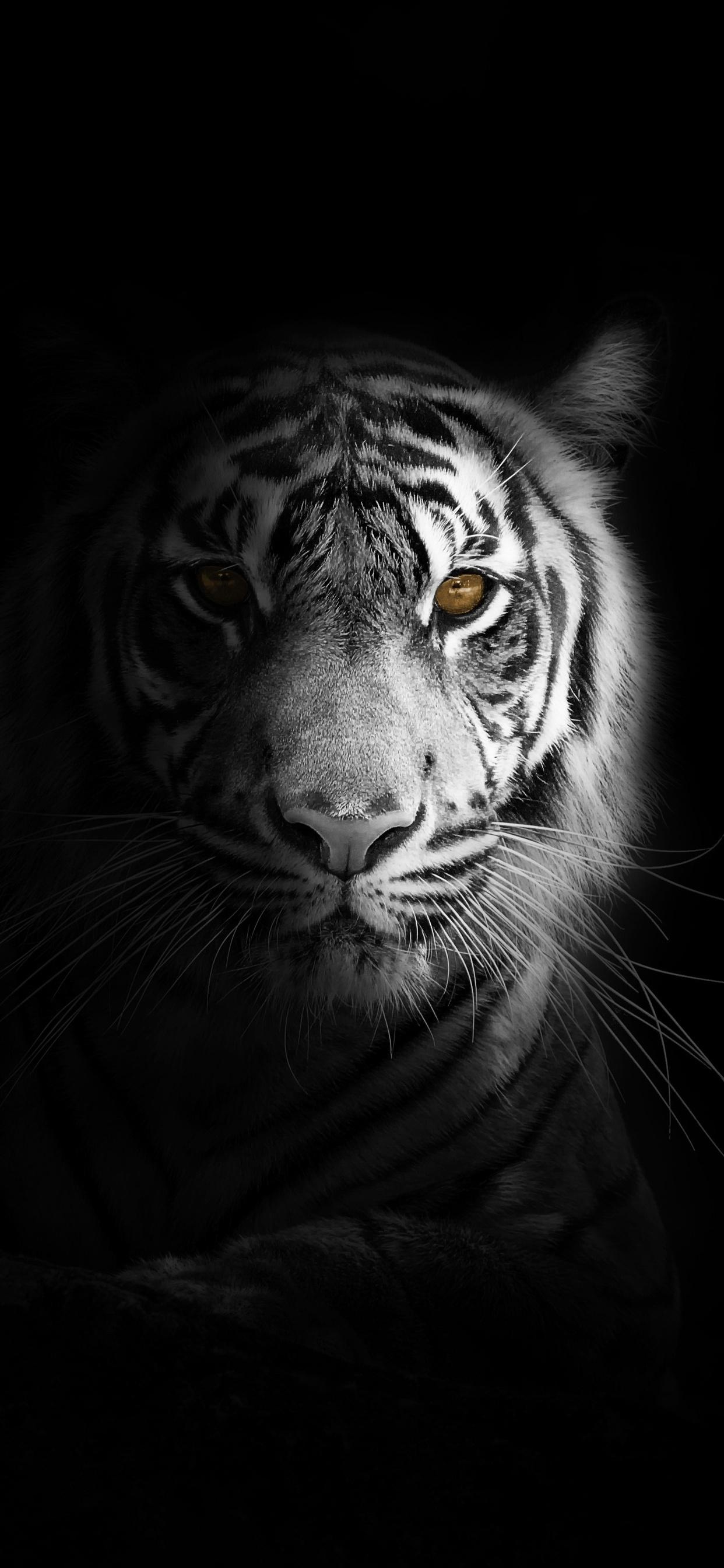1242x2688 Big Cat Tiger 4k Iphone Xs Max Hd 4k Wallpapers