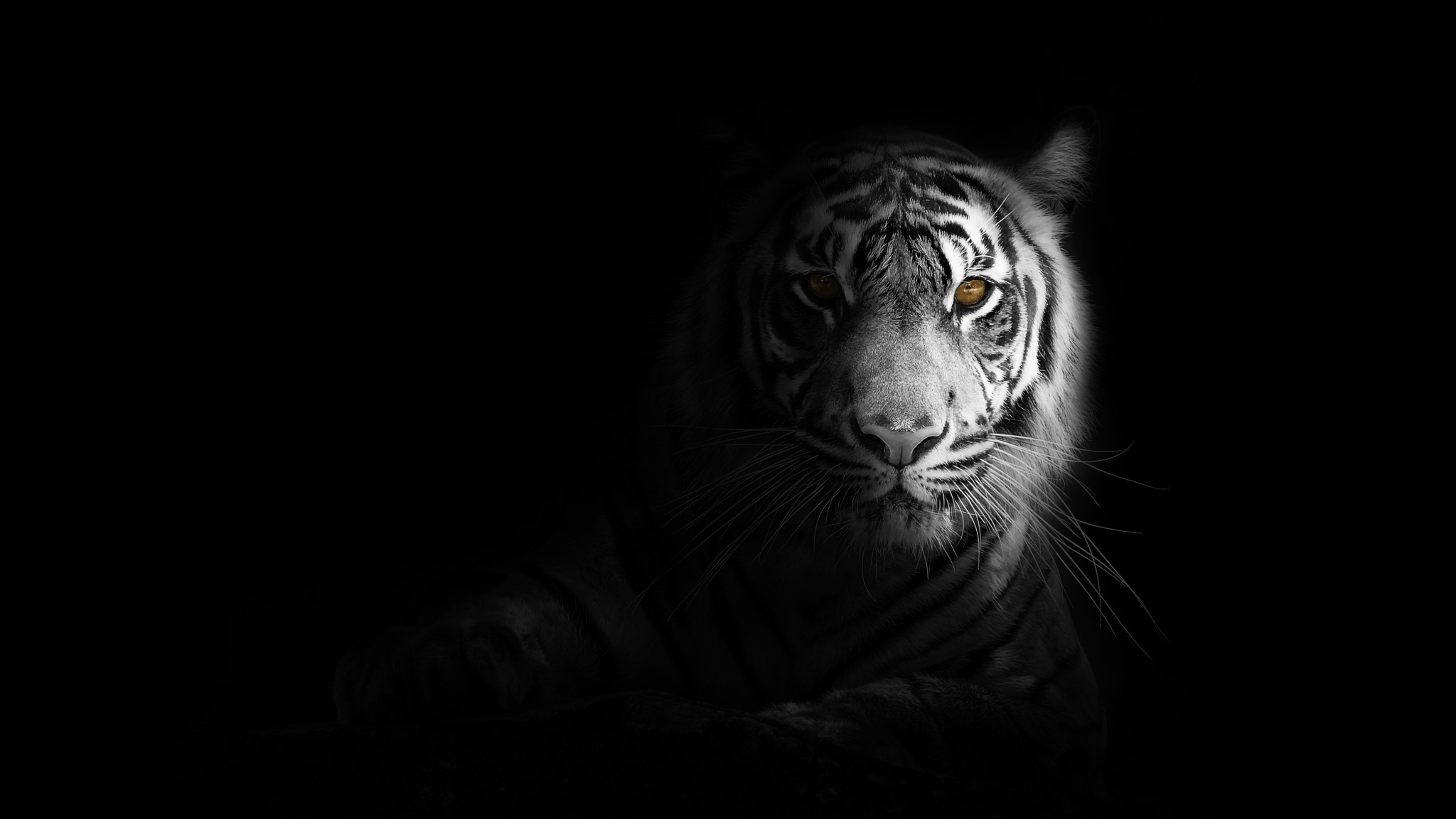 2048x1152 Big Cat Tiger 4k 2048x1152 Resolution Hd 4k Wallpapers Images Backgrounds Photos And Pictures