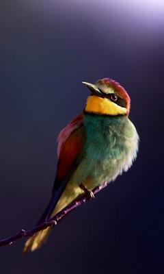bird-bee-eater-4k-e8.jpg