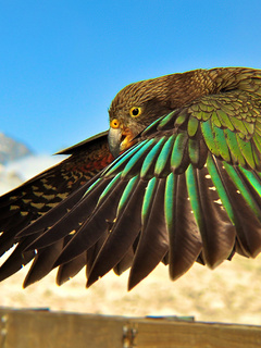 bird-flying-4k-o0.jpg
