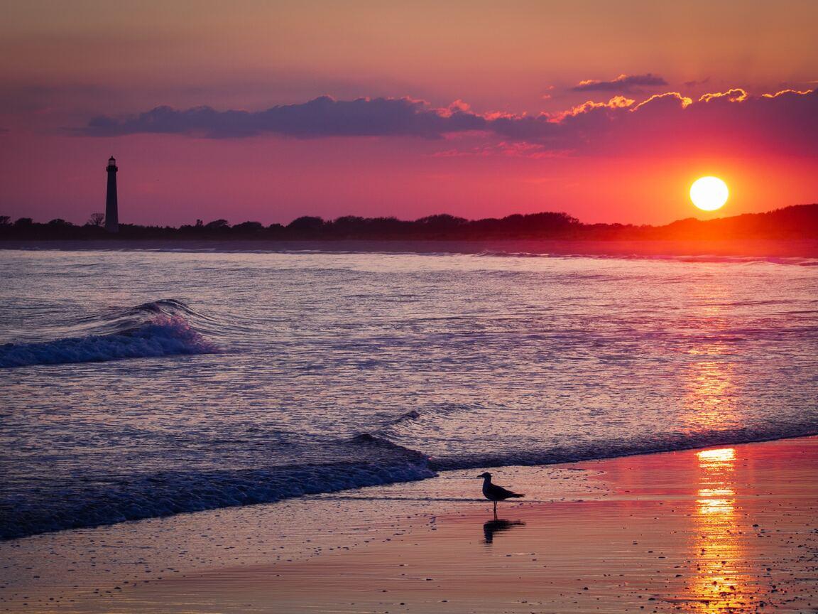 bird-sea-shore-sunset-4k-xo.jpg
