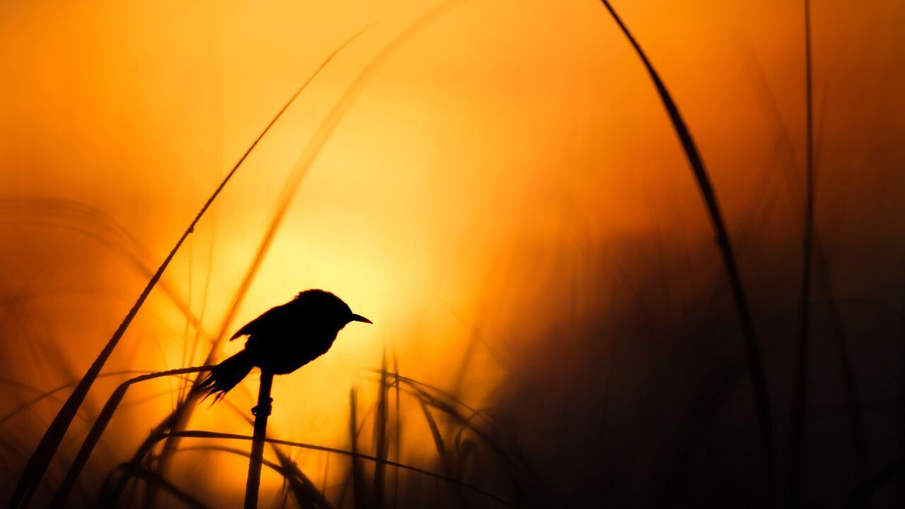 bird-silhouette-4k-l5.jpg