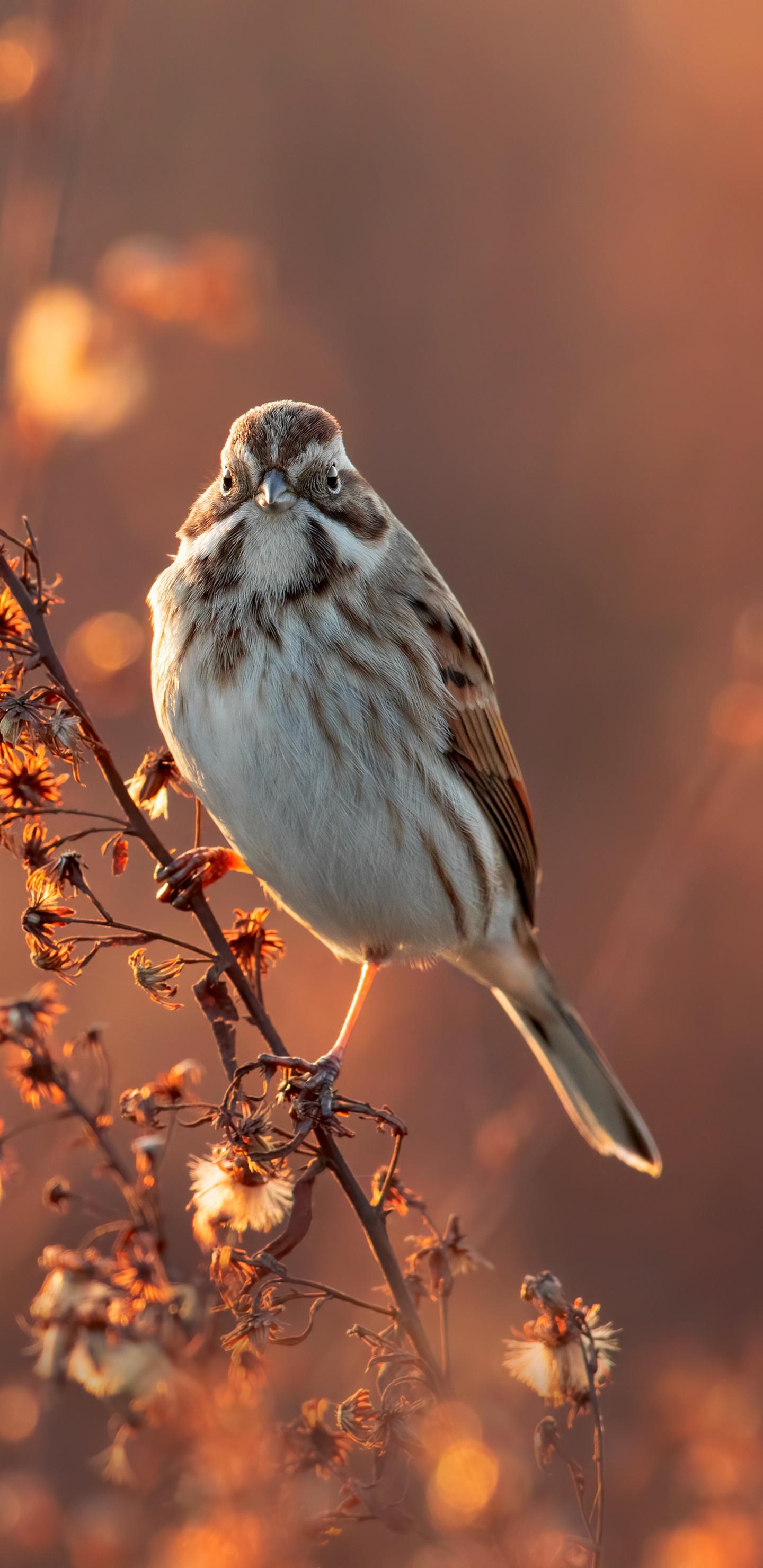 bird-sitting-on-branch-8a.jpg