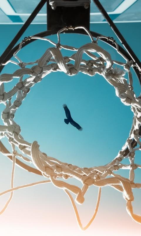 bird-view-from-basketball-ring-9f.jpg