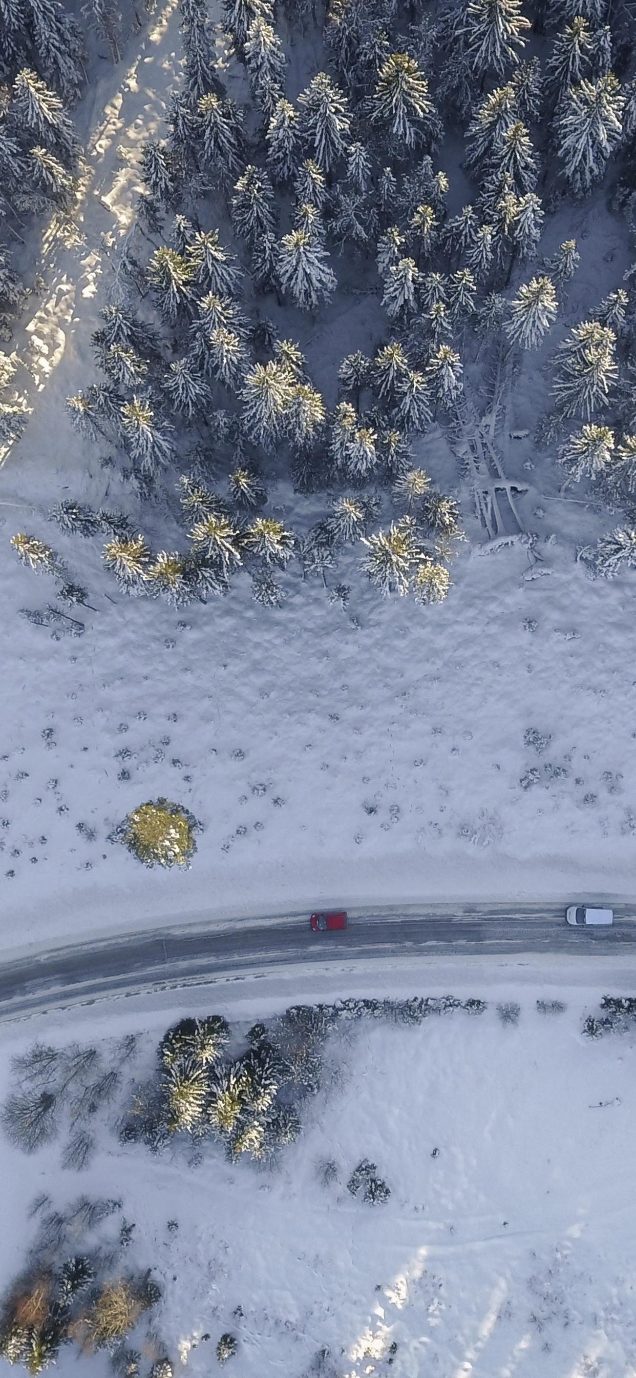 1242x2688 Birds Eye Aerial View Of Road Trees Winter 4k