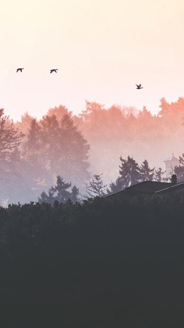 birds-flying-back-home-4k-6x.jpg