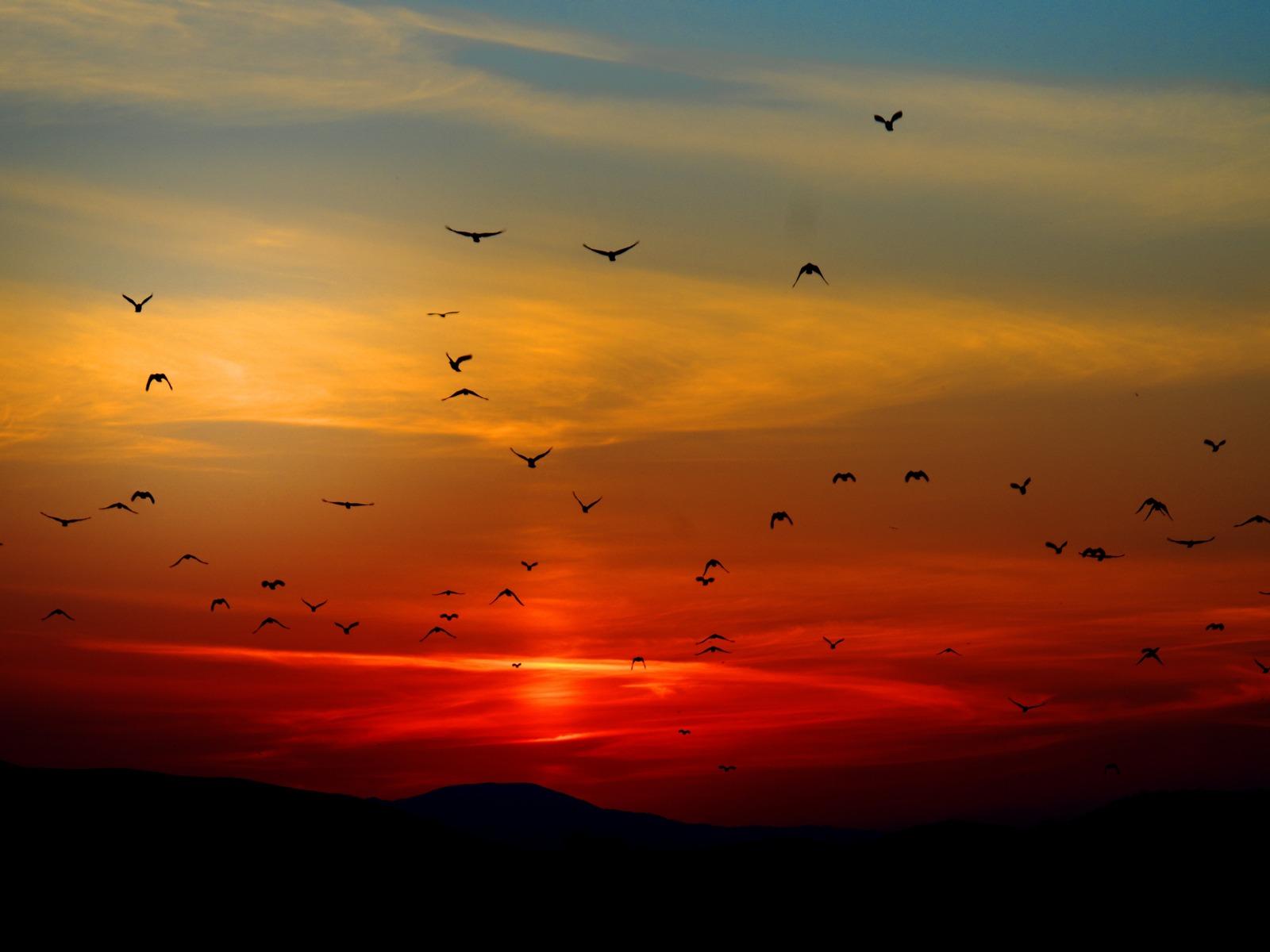 birds-flying-towards-sunset-4k-5k-38.jpg
